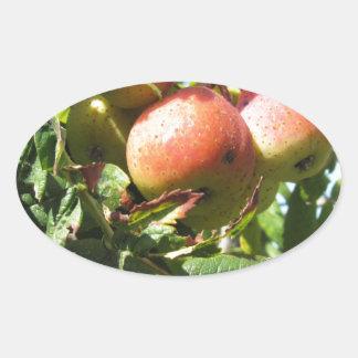 Sorbs in fruit tree . Tuscany, Italy Oval Sticker