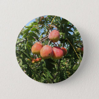 Sorbs in fruit tree . Tuscany, Italy Pinback Button