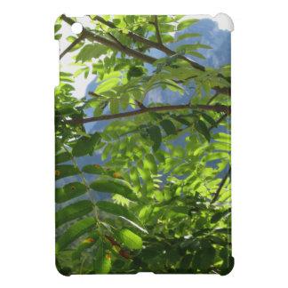 Sorbus Bush de la ceniza de montaña con las bayas