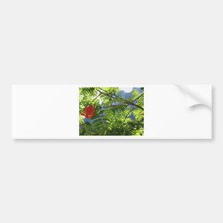 Sorbus Bush de la ceniza de montaña con las bayas Pegatina Para Auto