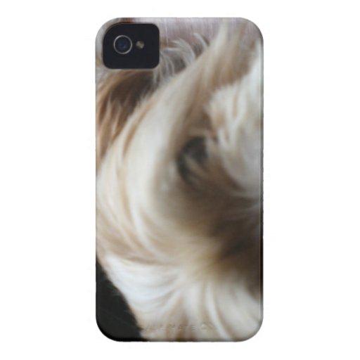 Sorpresa al revés de la cabeza del apso de Lasa de iPhone 4 Case-Mate Carcasas