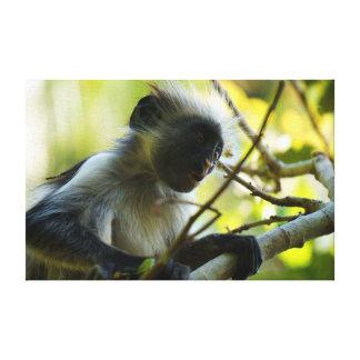 Sorpresa del mono lienzo envuelto para galerias