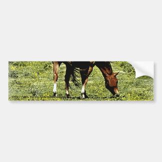 Sorrel Horse Car Bumper Sticker