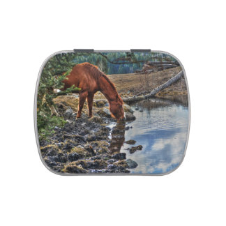 Sorrel Horse Drinking from Forest Pool Candy Tins