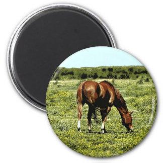 Sorrel Horse Magnet