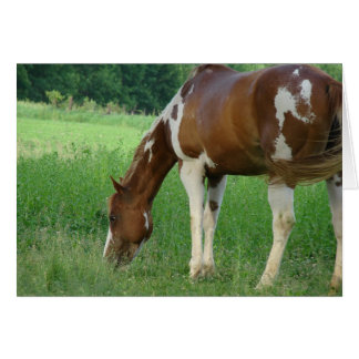 Sorrel Tobiano Paint Mare Card
