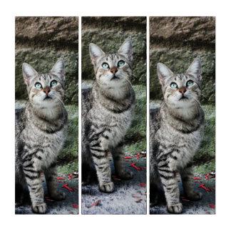 Sorrento Tabby Cat Photography Triptych