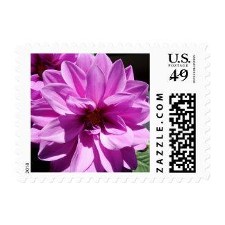 Sorrow Stamp