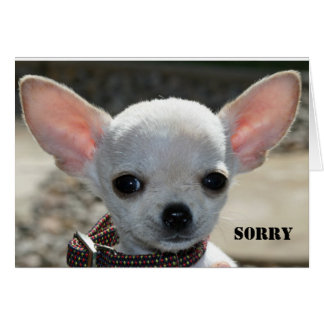 SORRY CARD