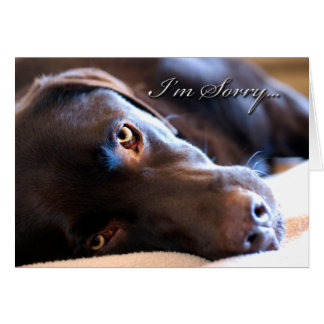 Sorry Chocolate Lab Greeting Cards