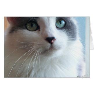 Sorry Kitty with Sad Eyes Card
