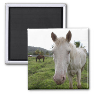 Soufriere3 2 Inch Square Magnet