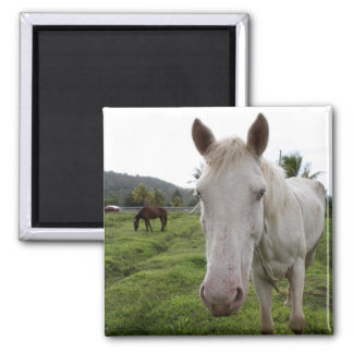 Soufriere 2 Inch Square Magnet