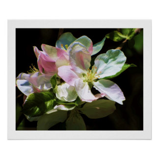 Soulful Apple Blossoms Poster