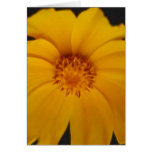 Soulful Coreopsis flower and meaning Card