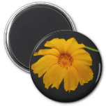 Soulful Coreopsis flower and meaning Refrigerator Magnets