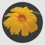 Soulful Coreopsis flower and meaning Sticker