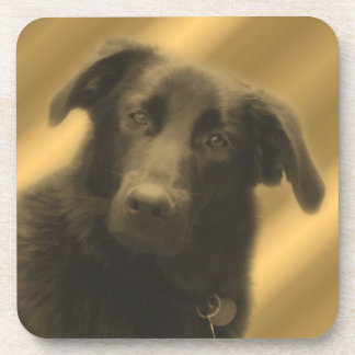Soulful Dog Eyes Animal Coaster Set
