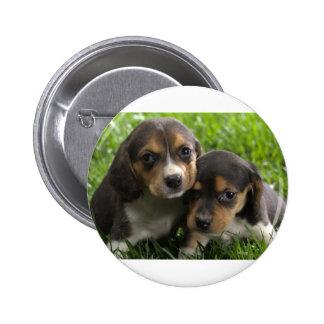 Soulful Eyes Dachshund Puppies Pinback Button