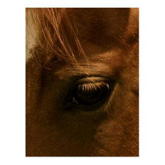 Soulful Horse Eye Postcard
