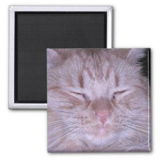 Sour Puss/Orange Tabby Kitten Magnet