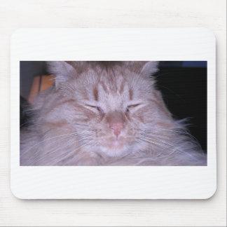 Sour Puss/Orange Tabby Kitten Mouse Pad