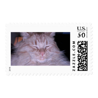 Sour Puss/Orange Tabby Kitten Postage