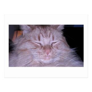 Sour Puss/Orange Tabby Kitten Postcard
