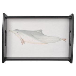 Sousa chinensis, delfín Indo-Pacífico del Humpback Bandejas