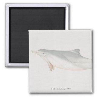 Sousa chinensis, delfín Indo-Pacífico del Humpback Iman