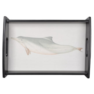 Sousa chinensis, Indo-Pacific Humpback Dolphin, Serving Platter