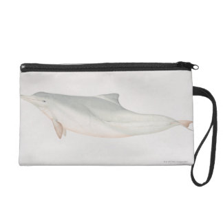 Sousa chinensis, Indo-Pacific Humpback Dolphin, Wristlet Clutches