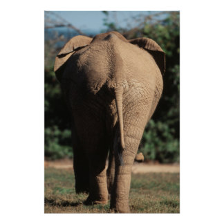 South Africa, Addo Elephant National Park, Poster