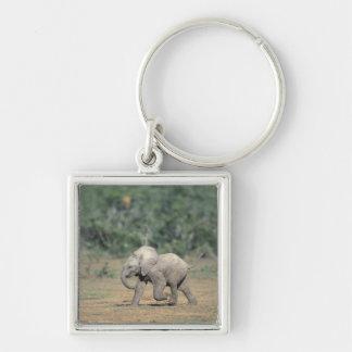 South Africa, Addo Elephant Nat'l Park. Baby Keychain
