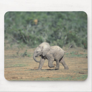 South Africa, Addo Elephant Nat'l Park. Baby Mouse Pad