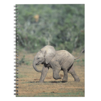 South Africa, Addo Elephant Nat'l Park. Baby Notebook