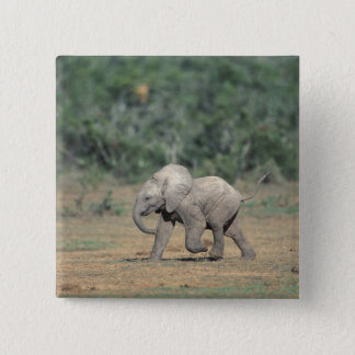 South Africa, Addo Elephant Nat'l Park. Baby Pinback Button