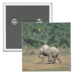South Africa, Addo Elephant Nat'l Park. Baby Pins