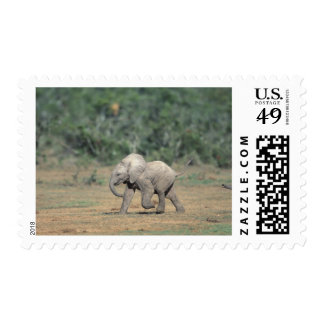 South Africa, Addo Elephant Nat'l Park. Baby Postage