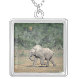 South Africa, Addo Elephant Nat'l Park. Baby Silver Plated Necklace