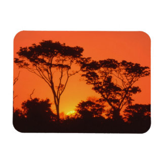 South Africa.  African sunset. Magnet