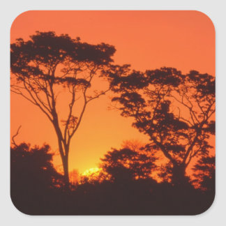 South Africa.  African sunset. Square Stickers
