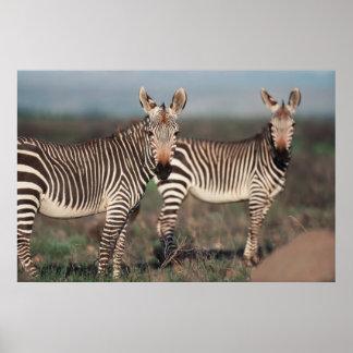 South Africa, Bontebok National Park Poster