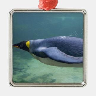 South Africa, Cape Town. Two Oceans Aquarium. Metal Ornament