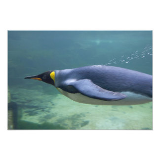South Africa Cape Town Two Oceans Aquarium Photo Art