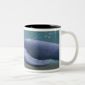 South Africa, Cape Town. Two Oceans Aquarium. Two-Tone Coffee Mug
