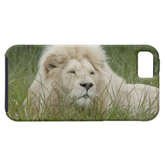 South Africa, East London, Inkwenkwezi Private iPhone 5 Cover