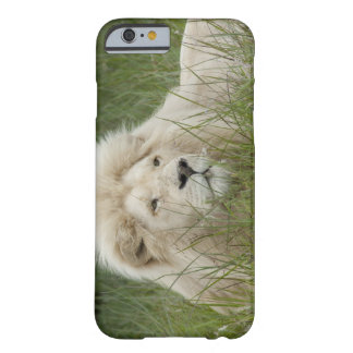 South Africa, East London, Inkwenkwezi Private Barely There iPhone 6 Case