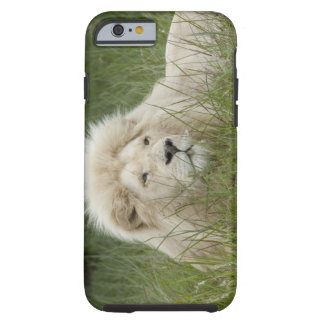 South Africa, East London, Inkwenkwezi Private Tough iPhone 6 Case
