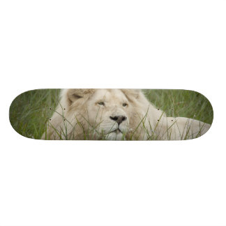 South Africa, East London, Inkwenkwezi Private Skateboard Deck
